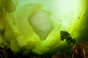 Scuba diver under ice formation, Arctic circle Dive Center, White Sea, Karelia, northern Russia, March 2010  -  Franco Banfi