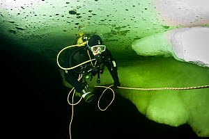 Scuba diver under, Arctic circle Dive Center, White Sea, Karelia, northern Russia, March 2010  -  Franco Banfi