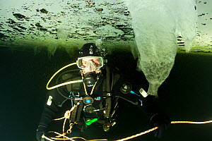 Scuba diver under ice with stalactite ice formation, Arctic circle Dive Center, White Sea, Karelia, northern Russia, March 2010  -  Franco Banfi