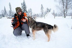 Guest interacting with Siberian Husky used as sled dog inside Riisitunturi National Park, Lapland, Finland  -  Franco Banfi