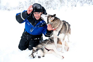 Photography Franco Banfi playing with Siberian Husky dogs used as sled dog inside Riisitunturi National Park, Lapland, Finland  -  Franco Banfi