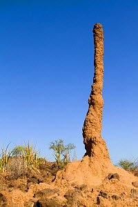 Tall Termite mound near Lake Bogoria, Kenya  -  Denis-Huot