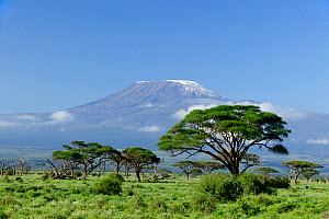 Mount Kilimanjaro from Amboseli National Park, Kenya, May 2005 - Denis-Huot