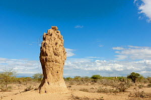 Termite hill near Lake Magadi, Kenya  -  Denis-Huot