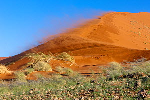 Sossusvlei dunes, wind in rainy season, Namib-Naukluft National Park, Namib desert, Namibia, April 2008 - Denis-Huot