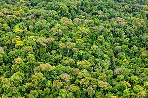 Tropical forest canopy,  Corcovado National Park, Costa Rica, May 2009 - Denis-Huot