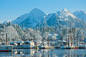Snow covered fishing boats in Sitka Harbour, Alaska. Photograph taken on location for BBC TV series 'Nature's Great Events', March 2008. - Barrie Britton,Barrie Britton