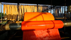Newly dyed fabric being washed and rolled in a sari garment factory, Rajasthan, India, UK  -  Gavin Hellier