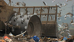 Close-up of machinery moving on a landfill site, with a mixed flock of Gulls (Larus sp.) in the background, Pitsea, Essex, England, UK, November 2011.  -  Will  Bolton / 2020VISION