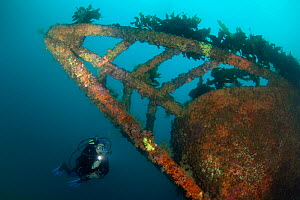 Wreck of the Rainbow Warrior with diver, Cavalli Islands, New Zealand, January 2013. Model released.  -  Sue Daly