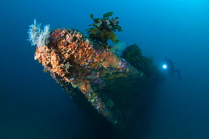 Wreck of the Rainbow Warrior, Cavalli Islands with diver, New Zealand, January 2013. Model released.  -  Sue Daly