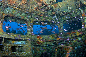 Shoals of fish inside the bridge of the wreck of HMNZS Canterbury, Bay of Islands, New Zealand, January 2013  -  Sue Daly