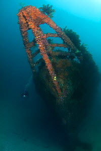 Wreck of the Rainbow Warrior with diver, Cavalli Islands, New Zealand, February 2013. Model released.  -  Sue Daly