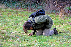 Botanist kneeling whilst surveying an urban garden under threat of development in the hope of finding a plant species which might save the site, Highbury, London Borough of Islington, England UK, Janu...  -  Pat  Tuson