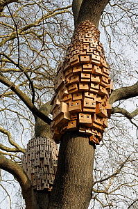 Over 250 bird and bug boxes, a sculptural installation called Sponanteous City, in a Tree of Heaven (Ailanthus altissima) Duncan Terrace Gardens, London Borough of Islington, England, UK, February 201...  -  Pat  Tuson