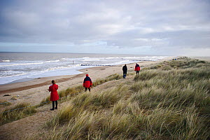 Visitors viewing Grey Seal colony at Winterton Dunes, Norfolk, December 2010 - David Tipling