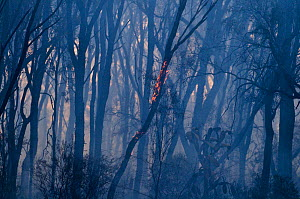 Aftermath of a bush fire near Charter Towers, Queensland, Australia  -  David Tipling