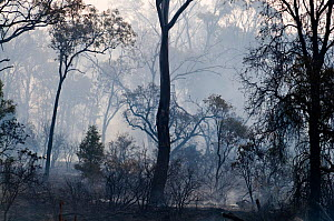Aftermath of a bush fire near Charter Towers Queensland, Australia  -  David Tipling