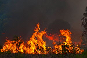 Bush fire near Charter Towers in Queensland, Northern Australia, October  -  David Tipling
