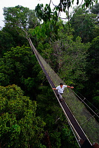 Aerial walkway through Rainforest canopy at Exploramo Lodge, Iquitos Region, Amazon, Peru - David Tipling