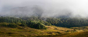 Grassland and forest at 9,000 feet, at Tari Gap, Highlands, Papua New Guinea, August 2011  -  David Tipling