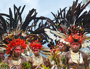 Sing-sing group from Western Highlands performing at Hagen Show, Papua New Guinea. With black plumes from the Black Sicklebill a bird of paradise. August 2011. - David Tipling