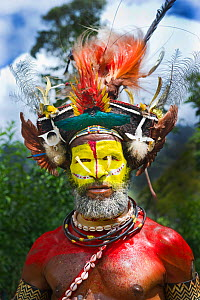 Huli Wigman from the Tari Valley, Southern Highlands at a Sing-sing, Mount Hagen, Papua New Guinea. Wearing bird of paradise feathers and plumes particularly Raggiana Bird of Paradise plumes  and brea... - David Tipling