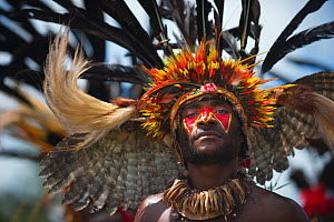 Performer from the Kupop Sing-sing group from Jiwaka Province, performng at Hagen Show at Mount Hagen, Papua New Guinea Wearing head dress of owl wings in head dress and sicklebill feathers. August 20...  -  David Tipling