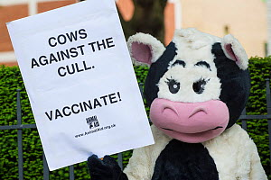 Person in cow costume, with sign reading 'Cows against the cull - Vaccinate' at anti badger cull march, London, 1st June 2013  -  Terry Whittaker
