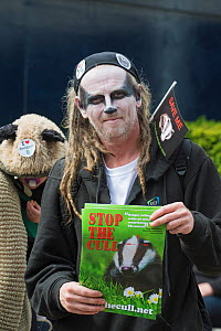 Man with Badger facepaint, holding leaflets which say 'Stop the cull', at anti bager cull march, 1st June 2013. Editorial use only  -  Terry Whittaker