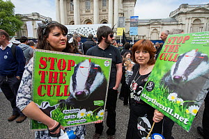 Women holding signs reading 'Stop the cull' at anti badger cull march, London, 1st June 2013. Editorial use only.  -  Terry Whittaker