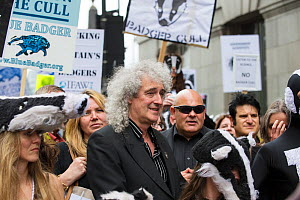 Rock star and activist Brian May leads marchers at anti badger cull march, London 1st June 2013.  -  Terry Whittaker
