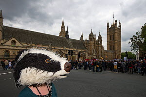 Anti badger cull protestor, with badger mask, outside the Houses of Parliament, London 1st June 2013  -  Terry Whittaker