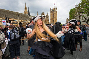 Dancers from the Artful Badger group, dancing in badger costumes, anti badger cull march, near Houses of Parliament, London 1st June 2013.  -  Terry Whittaker