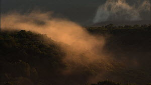 Timelapse of mist moving over and dispersing above cloud forest, Santa Rosa National Park, Costa Rica, 2008.  -  Ammonite