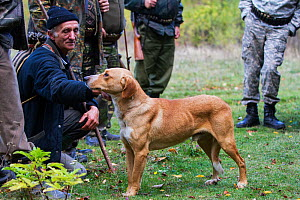 Romanian man helping as a driver during a driving hunt for Wild boar (Sus scrofa) and petting hunting dog. Mehadia, Caras Severin, Romania, October 2012  -  Wild Wonders of Europe / Möllers