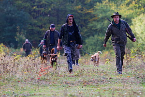 Group of Romanian hunters and their dogs returning from a driving hunt for Wild boar (Sus scrofa) in the forest area outside the village of Mehadia, Caras Severin, Romania, October 2012  -  Wild Wonders of Europe / Möllers