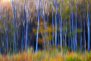 Common beech (Fagus sylvatica) forest in autumn colours, abstract. Southern Carpathians, Baile Herculane, Caras Severin, Romania, October 2012  -  Wild Wonders of Europe / Möllers