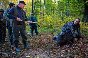 Romanian hunters 'baptizing' young colleague who shot his first Wild boar (Sus scrofa) during a driving hunt in the forest area outside the village of Mehadia, Caras Severin, Romania, October 2012  -  Wild Wonders of Europe / Möllers