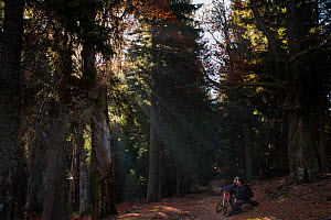 Mountain biker and hiker in the mixed old growth Spruce (Picea abies) and Common beech (Fagus sylvatica) forest of the Tarcu Mountains Natura 2000 site. Southern Carpathians, Muntii Tarcu, Caras-Sever...  -  Wild Wonders of Europe / Möllers