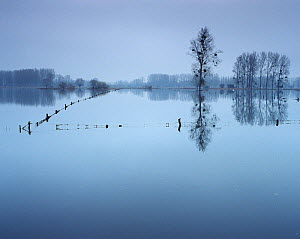 Flooded pastures, Chauny, Oise region, Picardy, France, January 2008  -  Pascal Tordeux,Pascal  Tordeux
