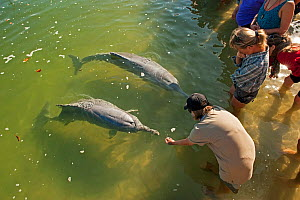 Tourists feeding Indo-Pacific Humback Dolphins (Sousa chinensis) Tin Can Bay, Great Sandy Strait, Queensland, Australia, October 2009  -  Steven David Miller