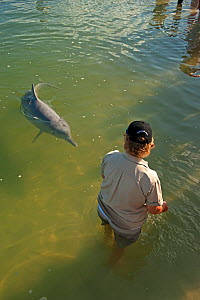 Tourist feeding Indo-Pacific Humback Dolphins (Sousa chinensis) Tin Can Bay, Great Sandy Strait, Queensland, Australia, October 2009  -  Steven David Miller