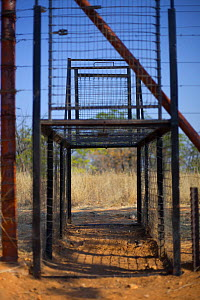 A trap in a fence to catch predators such as African wild dogs (Lycaon pictus), African lions (Panthera leo), Cheetahs (Acinonyx jubatus) and African leopards (Panthera pardus) moving between a protec...  -  Neil  Aldridge