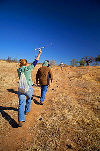 A researcher working for the Endangered Wildlife Trust using radio telemetry equipment to track African wild dogs (Lycaon pictus)  whilst walking with tourists, Venetia Limpopo Nature Reserve, Limpopo...  -  Neil  Aldridge