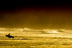 A lone surfer silhouetted whilst walking into the sea, Hells Mouth, Wales, October 2012  -  Graham  Eaton
