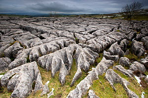 Limestone pavement above Malham Cove, Yorkshire  -  Graham  Eaton