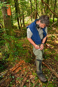 Pete Turner collecting Pine marten (Martes martes) hair samples. Research by the Waterford Institute of Technology, Ireland. Using baited plastic tubes they collect small samples of hair for DNA analy...  -  Terry Whittaker