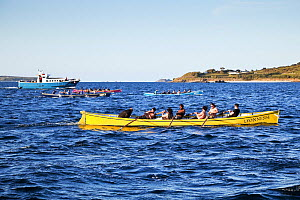 Gig race into St Mary's, Scilly Isles, Cornwall, England, May 2012. - Merryn Thomas
