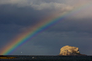 Rainbow and storm clouds over Bass Rock in the distance, which is the breeding ground for 140,000 gannets, Firth of Forth, Scotland, UK, May  -  Andrew Parkinson
